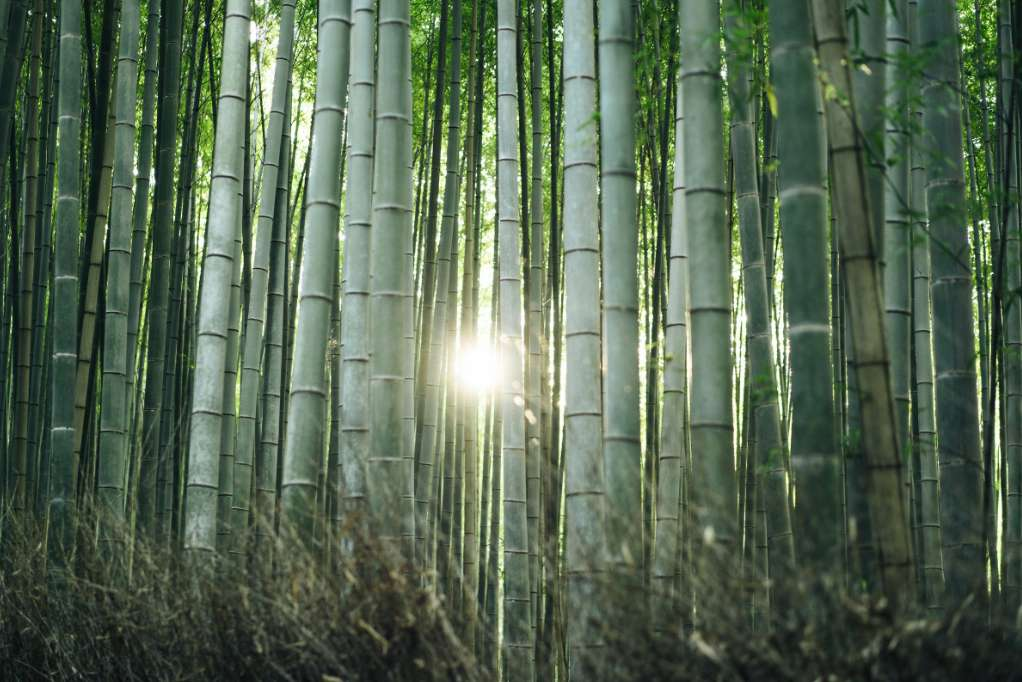 Bamboo farming and palm oil