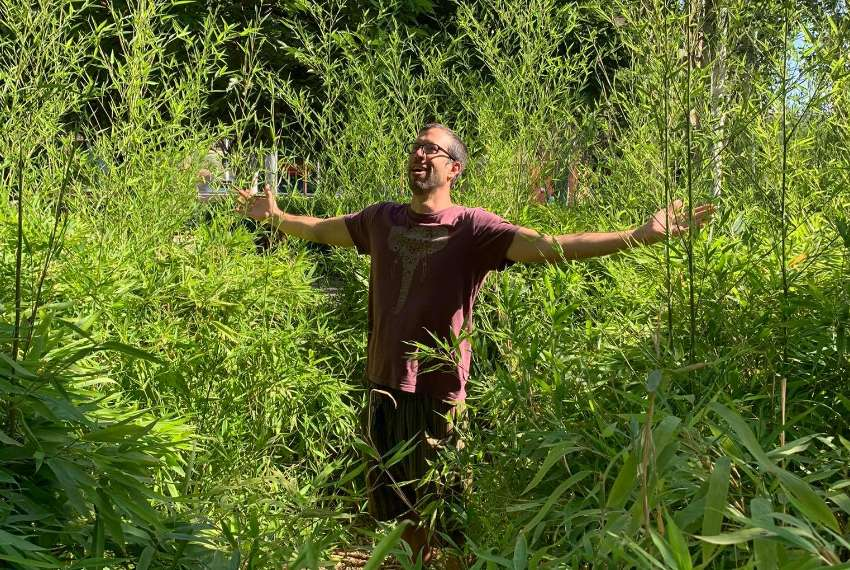 Growing Bamboo in Europe: Old World ornamentals