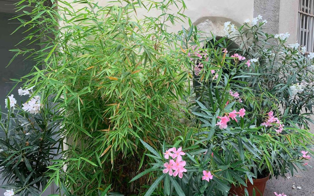 Companion planting with bamboo