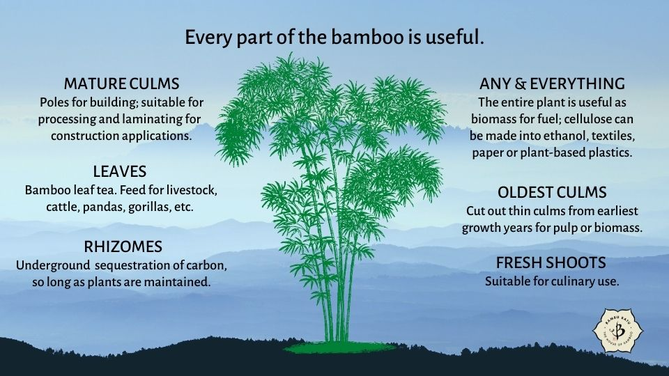 Bamboo Utility: Using every part of the plant