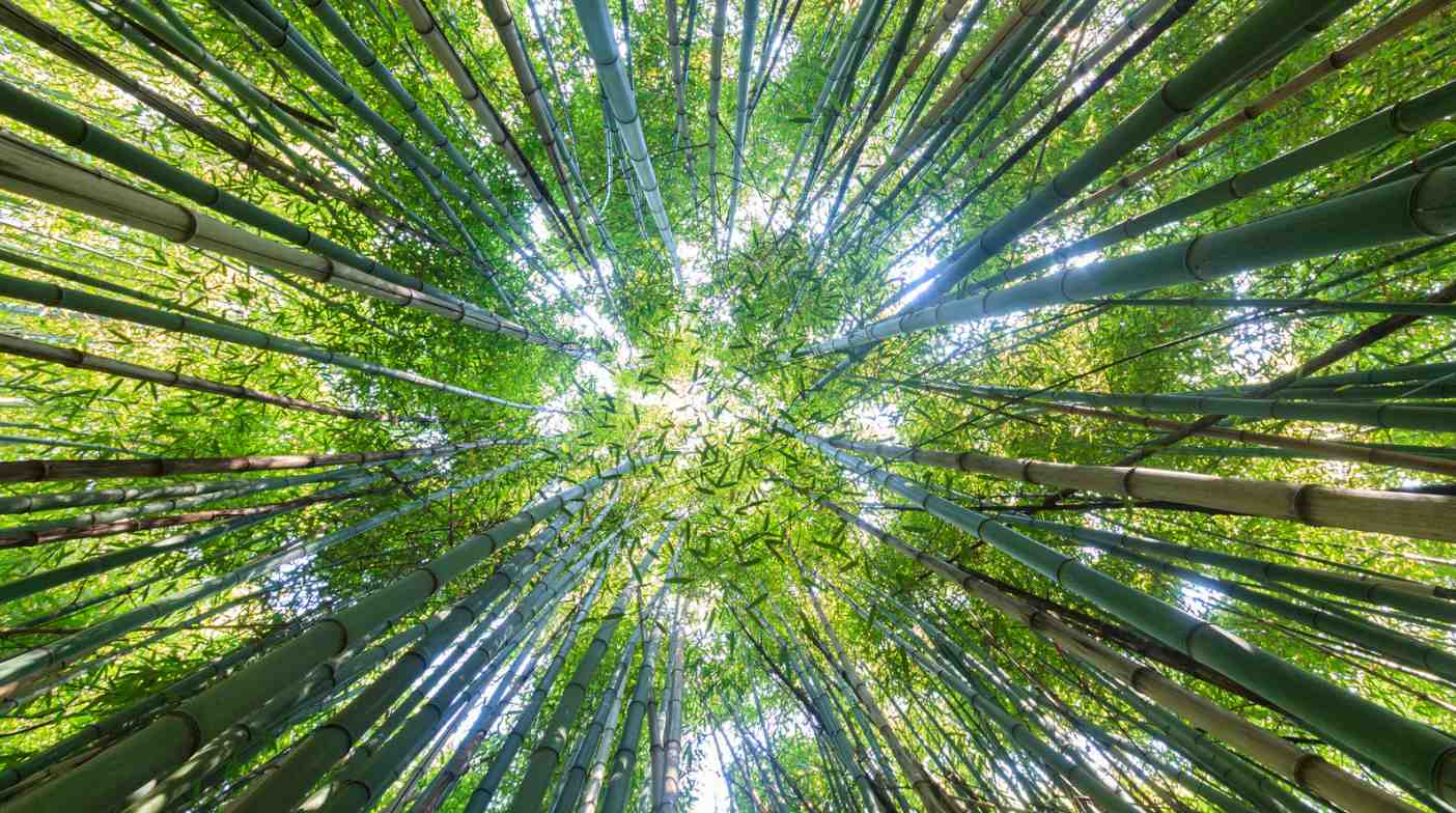 Sourcing Sustainable Bamboo